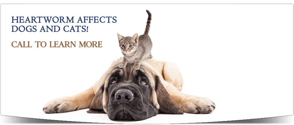 Heartworm Affects dogs and cats! Call to learn more.